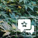 Strain Review: Casey Jones