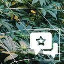 Strain Review: Casey Jones