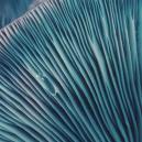 Magic Mushroom Tripping: Beginner's Tips
