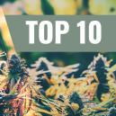 Our Top 10 Feminized Outdoor Strains