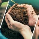 The Beginner's Conundrum: Soil Vs. Hydro