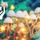 5 Surprising Benefits of Magic Mushrooms
