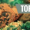 Top 10 Best Cannabis Recipes