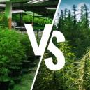 Growing Indoors vs. Outdoors: The Pros and Cons