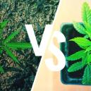 Growing Cannabis Outdoors: The Ground Vs Pots