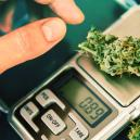 How To Choose The Right Cannabis Scale