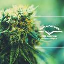 Getting To Know Dutch Passion: A Look At Their Popular Cannabis Strains