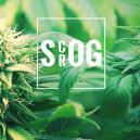ScrOG Vs. SOG: Which Is Right For You?