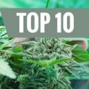 Top 10 Most Common Grower Mistakes