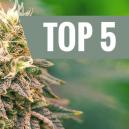 Top 5 Indica Strains of 2016