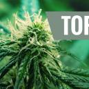 Top 5 Sativa Strains of 2016