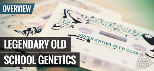 Oldskool Cannabis Genetics | Super Sativa Seed Club