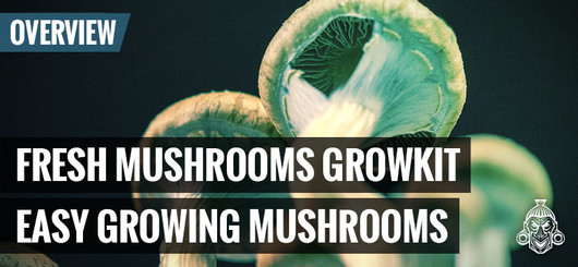 Fresh Mushrooms Growkit - Easy Growing Mushrooms