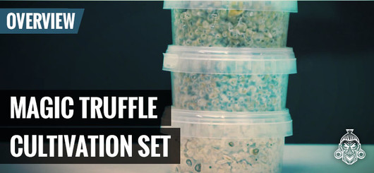 Magic Truffle Cultivation Set Mushmush - How To Setup