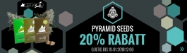 Angebot Pyramid Seeds