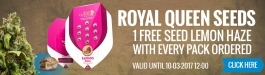 Royal Queen Seeds Offer