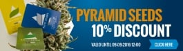 10% Discount Pyramid Seeds