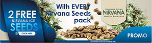 Offer Nirvana Seeds