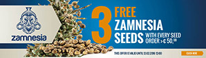 Cannabis Seed Offer