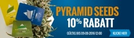 10% Rabatt Pyramid Seeds