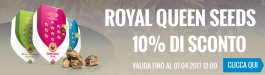 Offerta Royal Queen Seeds