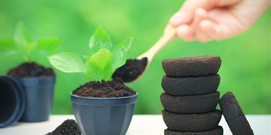 Feeding The Plants With Coffee