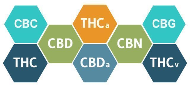 HOW WILL CBD AFFECT YOUR BODY?