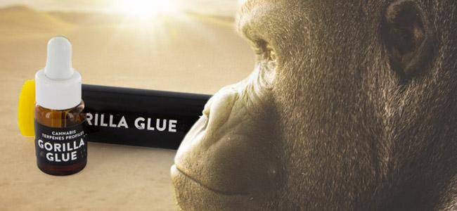 Gorilla Glue (Cali Terpenes)