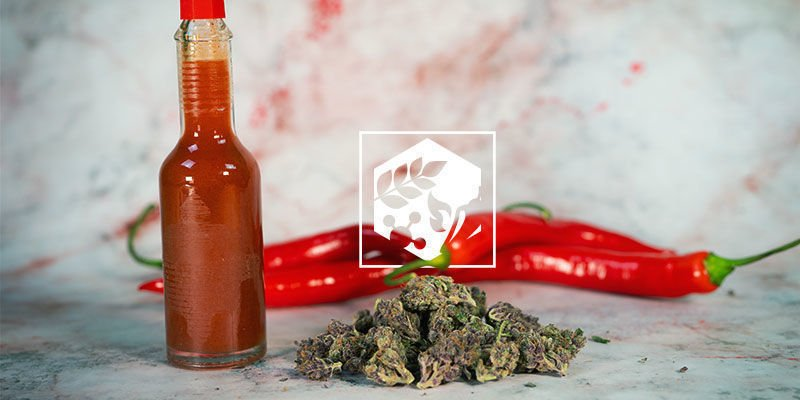 The Benefits of Hot Peppers in Food: nutrition