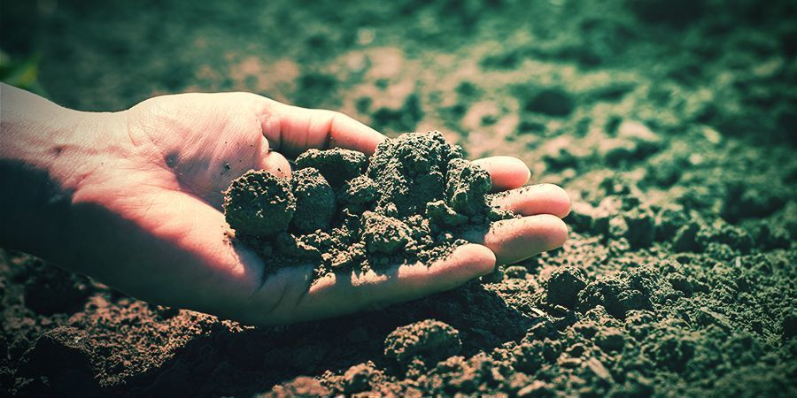 Climate And Soil Tabacco Seeds