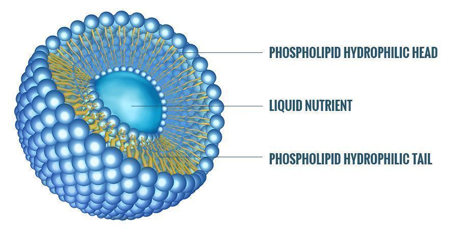 WHAT IS A LIPOSOME?