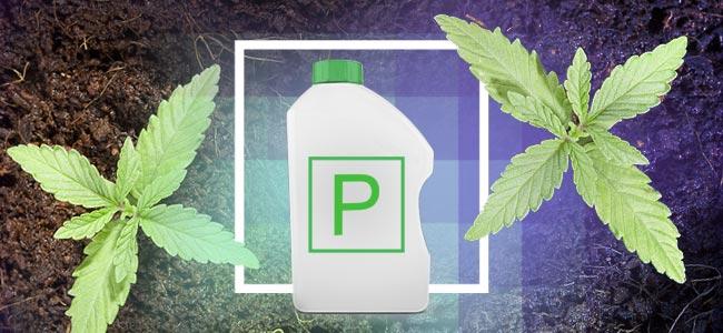 P Is For Phosphorus