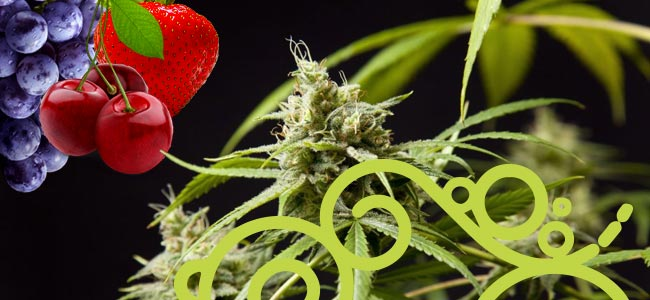 Fruity Jack (Philosopher Seeds)