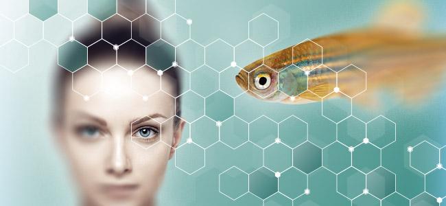 Zebrafish Genetic Similarity to Humans