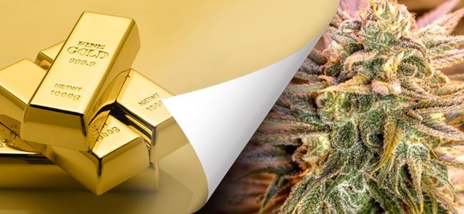 Gold Bar Kush - Spliff Seeds