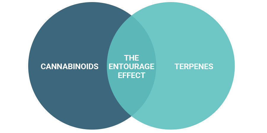 Does the Entourage Effect Get You High?