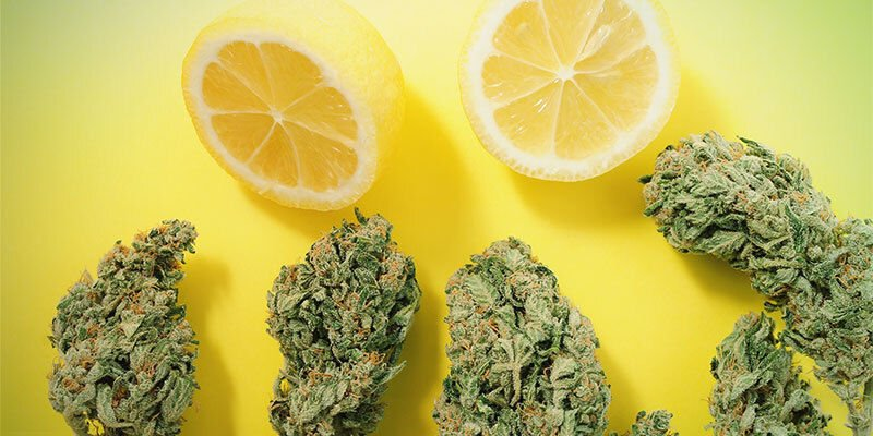 Entourage Effect and Terpenes