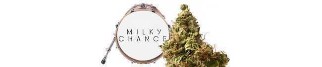 Milkshake Kush Autoflower (Amsterdam Genetics)