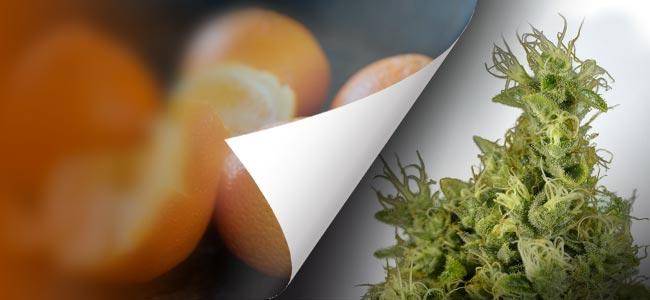 Mandarin Haze (Ministry Of Cannabis)