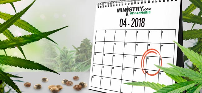 Seedbank Of The Month: Ministry Of Cannabis