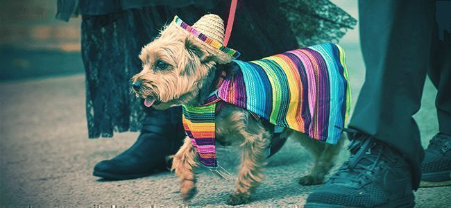 Dress Your Pets Up In Costumes