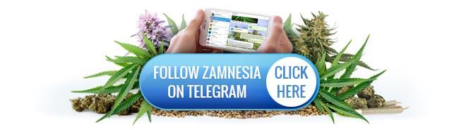Zamnesia Telegram
