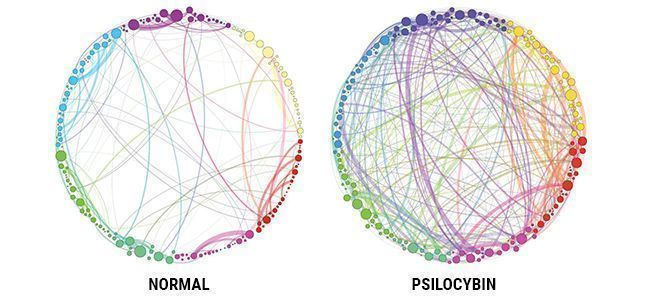 PSILOCYBIN & THE BRAIN