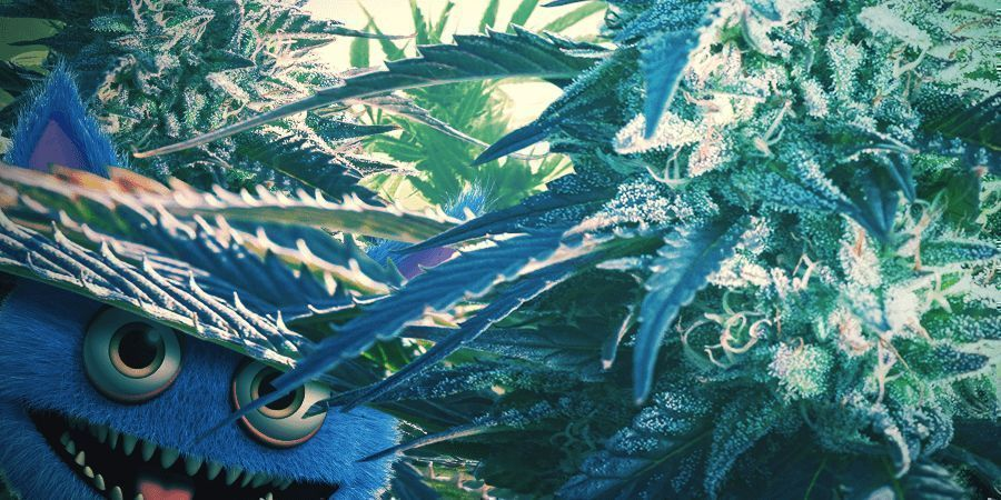 GROWERS WILL LOVE THE GREAT YIELDS