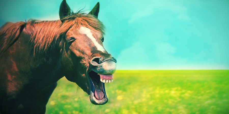 Horses That Love To Get High - Locoweed