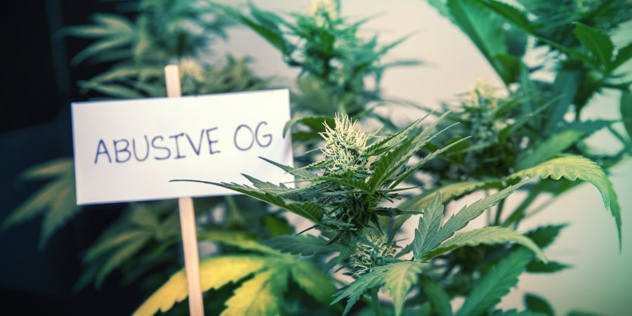 PROBLEMS WITH THE CURRENT CANNABIS NAMING SYSTEM