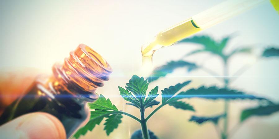 What Is CBD Cannabis?