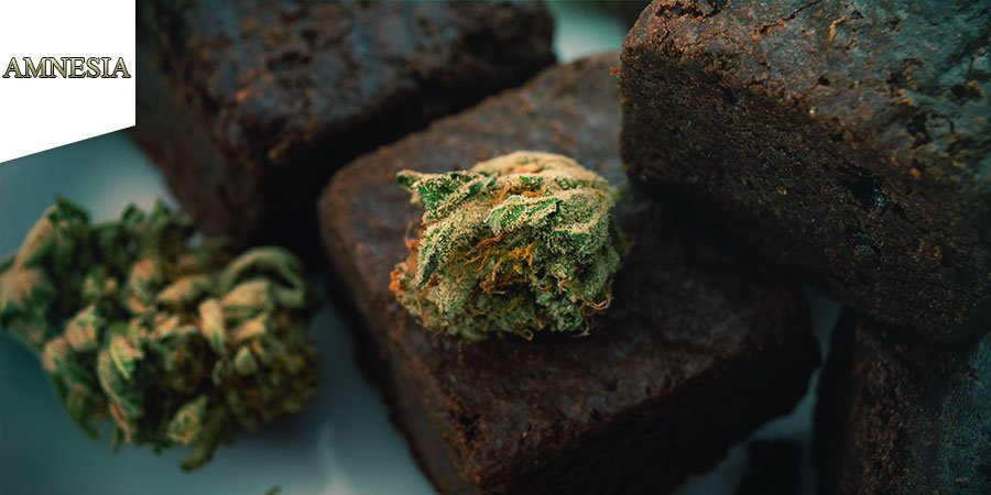 Coffeeshop Amnesia Amsterdam - Cannabis Edibles