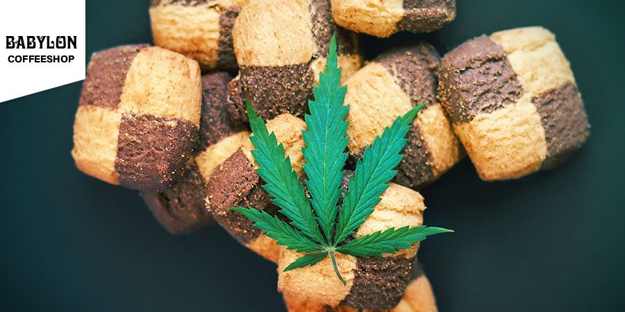 Coffeeshop Babylon Amsterdam - Cannabis Edibles