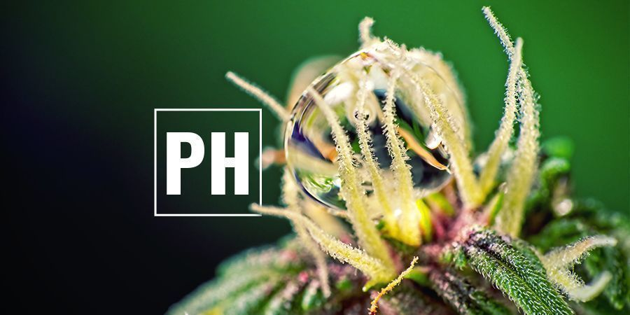 Optimize Cannabis pH Levels